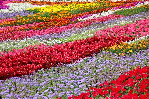 kolorowe rabatki
