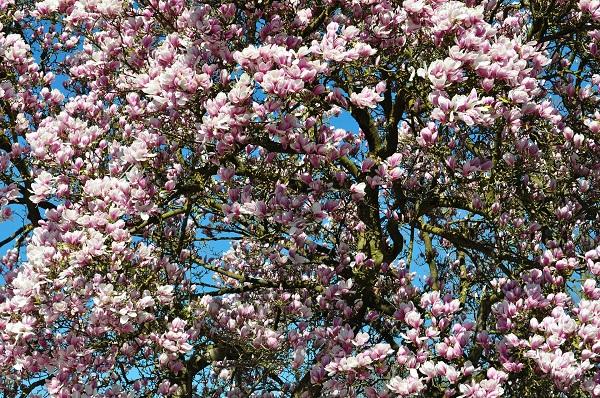 spraw by twój ogród rozkwitł na wiosnę