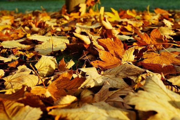 kora-i-jesienne-liście